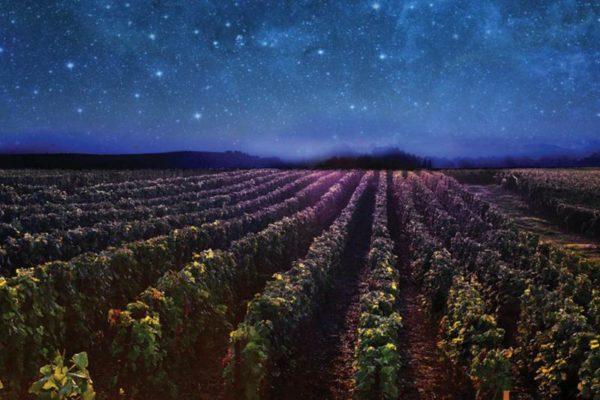 Vineyard, Champagne Billecart-Salmon, night starry sky, night